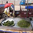 M_seaweed