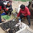 L_mussels